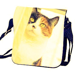 photo-bag-cat